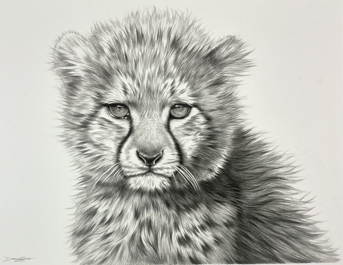 Cheetah Cub Study I
